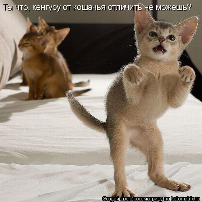 Котоматрица: Ты что, кенгуру от кошачья отличить не можешь?