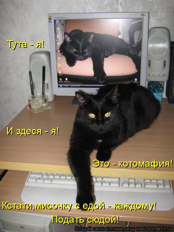 Котоматрица: Тута - я!  И здеся - я!  Это - котомафия! Кстати,мисочку с едой - каждому! Подать сюдой!