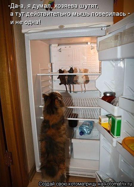 Котоматрица: -Да-а, я думал, хозяева шутят, а тут действительно мышь повесилась и не одна! -