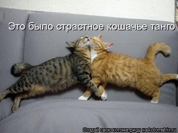 Котоматрица: Это было страстное кошачье танго