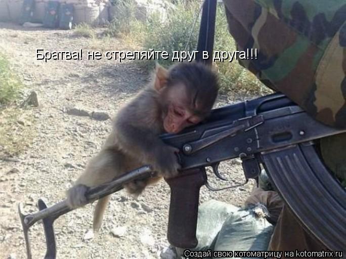 Котоматрица: Братва! не стреляйте друг в друга!!!