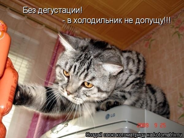 Котоматрица: Без дегустации! - в холодильник не допущу!!!