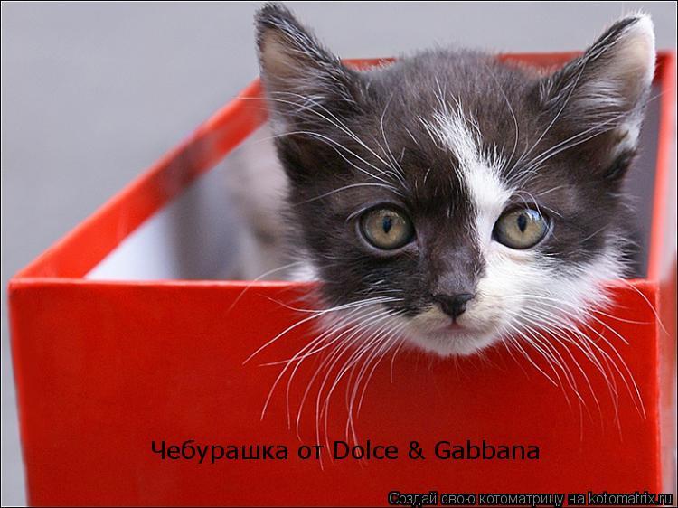 Котоматрица: Чебурашка от Dolce & Gabbana