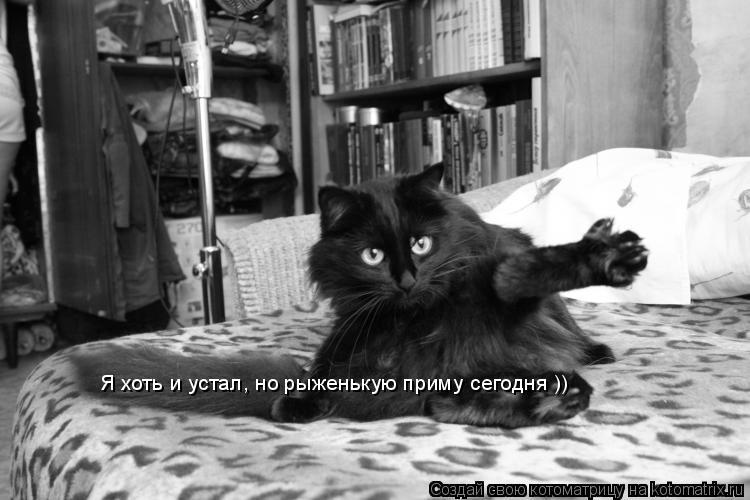 Котоматрица: Я хоть и устал, но рыженькую приму сегодня ))