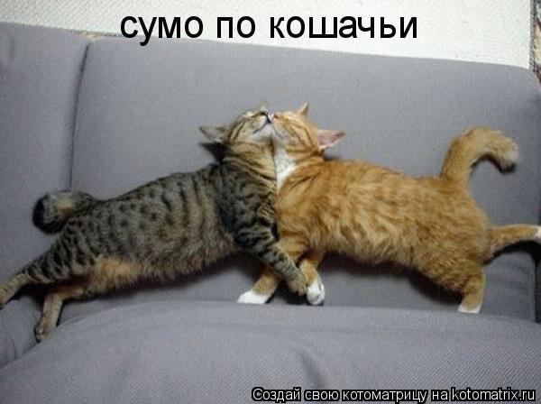 Котоматрица: сумо по кошачьи