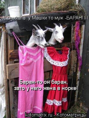 Котоматрица: -А слыхала  у Машки то муж -БАРАН!!!! Баран-то он баран,  зато у него жена в норке!