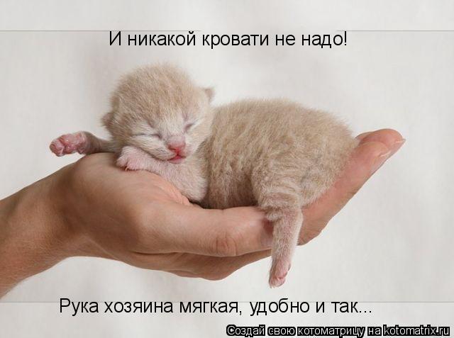 Котоматрица: И никакой кровати не надо! Рука хозяина мягкая, удобно и так...