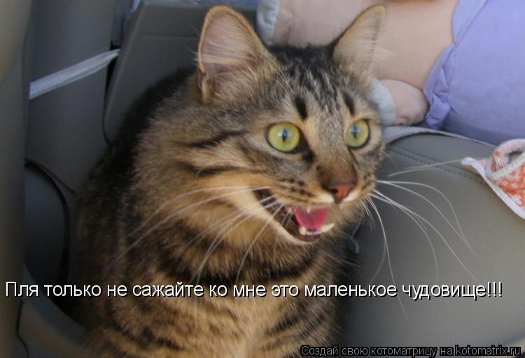 Котоматрица: Пля только не сажайте ко мне это маленькое чудовище!!!