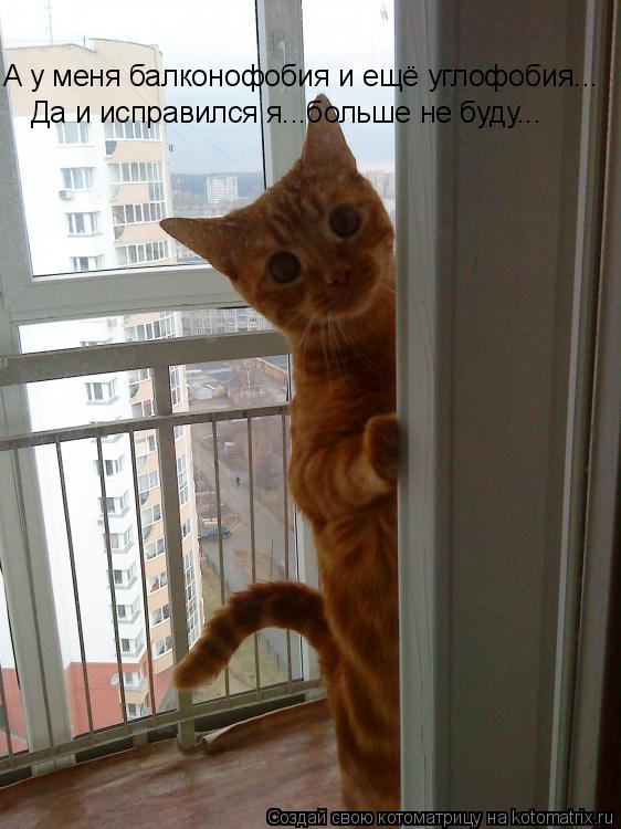 Котоматрица: А у меня балконофобия и ещё углофобия... Да и исправился я...больше не буду...