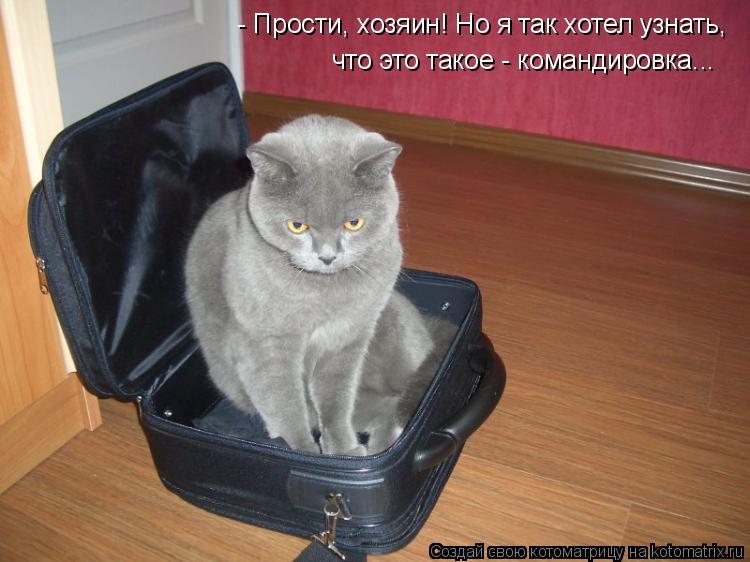 Котоматрица: - Прости, хозяин! Но я так хотел узнать,  что это такое - командировка...