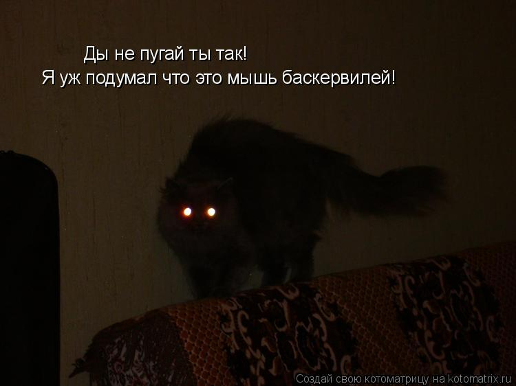 Котоматрица: Ды не пугай ты так! Я уж подумал что это мышь баскервилей!