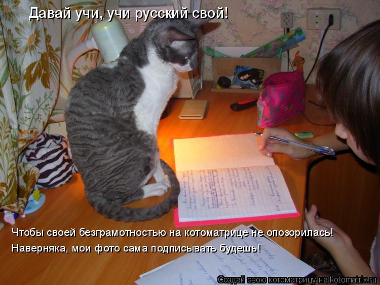 Котоматрица: Давай учи, учи русский свой! Чтобы своей безграмотностью на котоматрице не опозорилась! Наверняка, мои фото сама подписывать будешь!