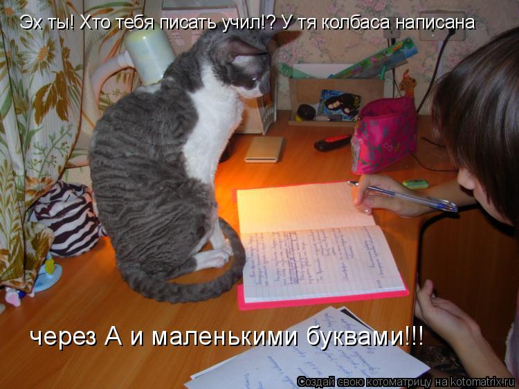 Котоматрица: Эх ты! Хто тебя писать учил!? У тя колбаса написана  через А и маленькими буквами!!!