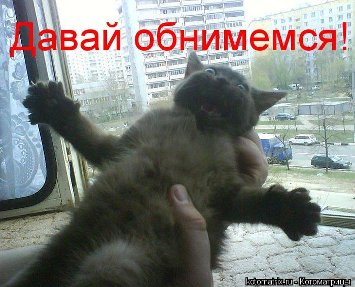 Котоматрица: Давай обнимемся!