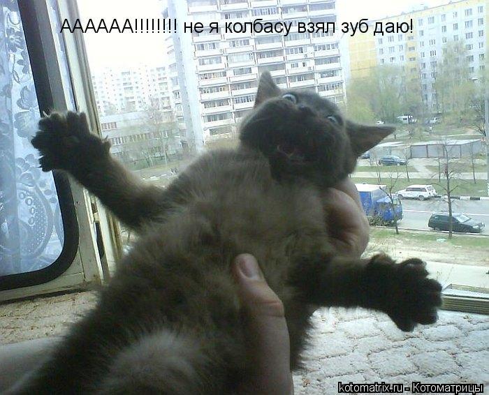 Котоматрица: АААААА!!!!!!!! не я колбасу взял зуб даю!