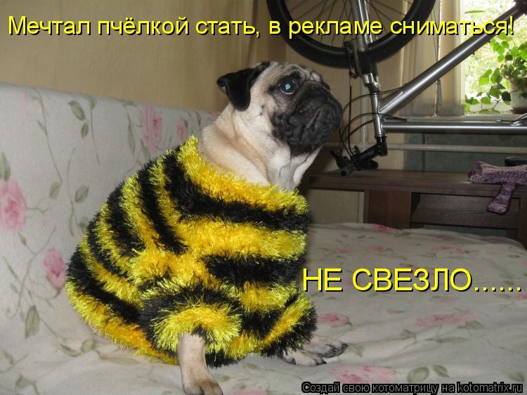 Котоматрица: Мечтал пчёлкой стать, в рекламе сниматься! НЕ СВЕЗЛО......