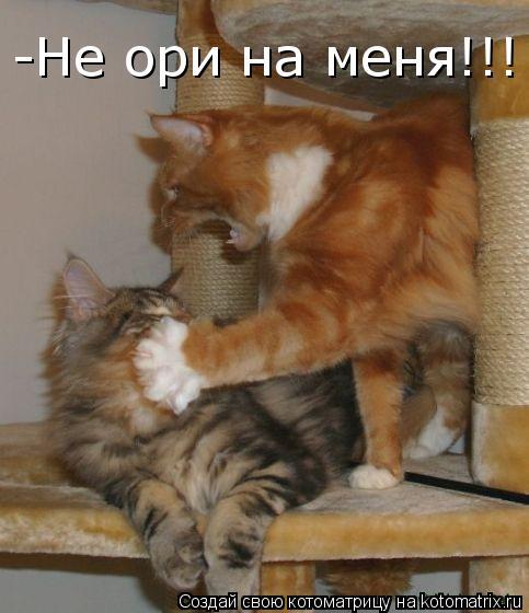 Котоматрица: -Не ори на меня!!!