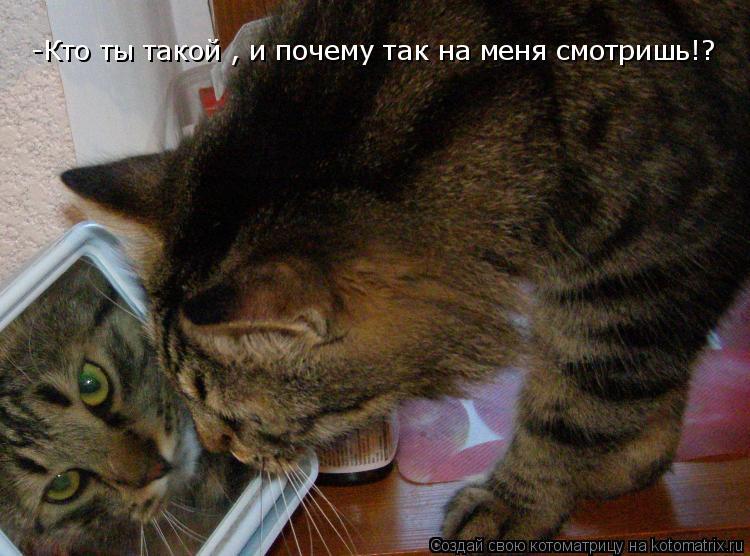 Котоматрица: -Кто ты такой , и почему так на меня смотришь!?