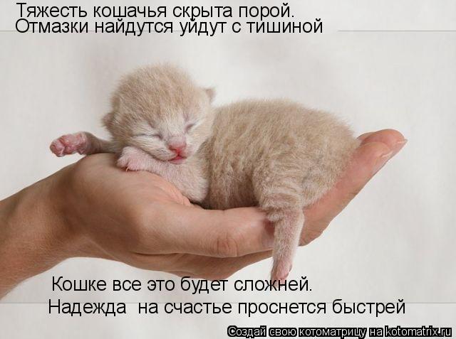 Котоматрица: Тяжесть кошачья скрыта порой. Отмазки найдутся уйдут с тишиной Кошке все это будет сложней. Надежда  на счастье проснется быстрей