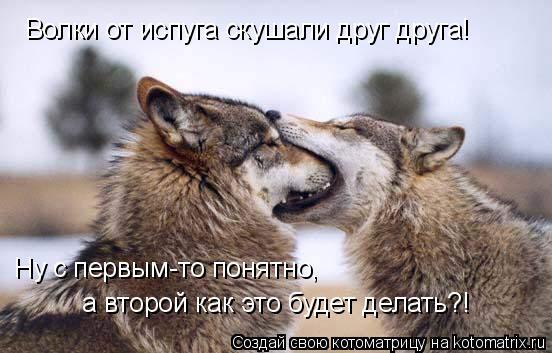 Котоматрица: Волки от испуга скушали друг друга! Ну с первым-то понятно,  а второй как это будет делать?!