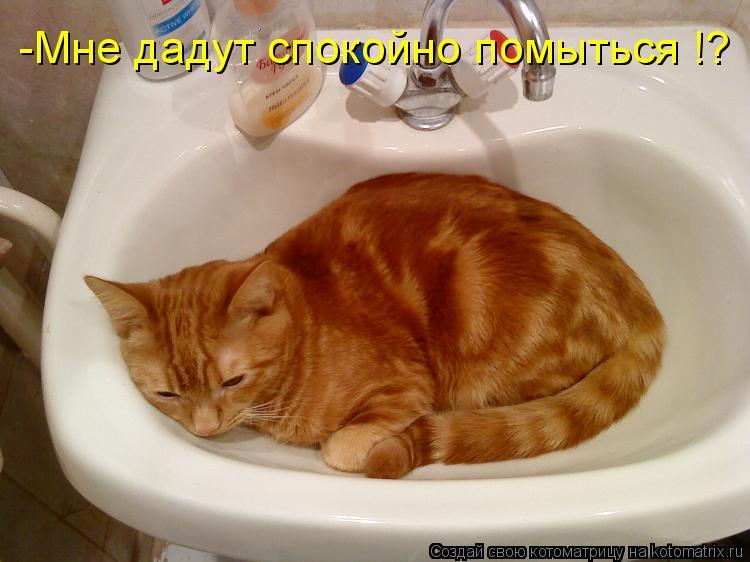 Котоматрица: -Мне дадут спокойно помыться !?