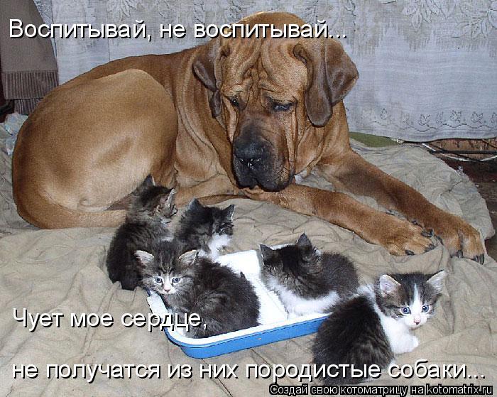 Котоматрица: Воспитывай, не воспитывай... Чует мое сердце, не получатся из них породистые собаки...