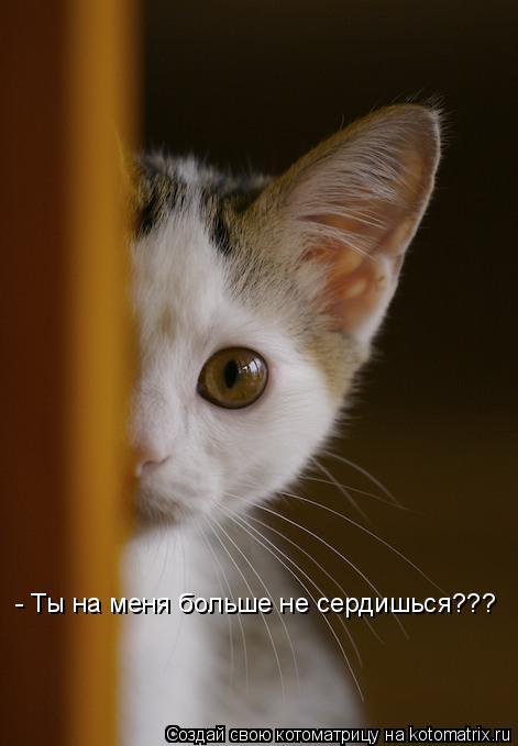 Котоматрица: - Ты на меня больше не сердишься???