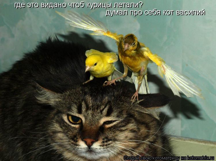Котоматрица: где это видано чтоб курицы летали? думал про себя кот василий