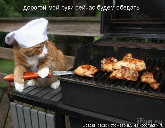 Котоматрица: дорогой мой руки сейчас будем обедать