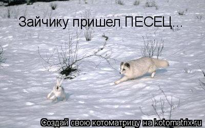 Котоматрица: Зайчику пришел ПЕСЕЦ...