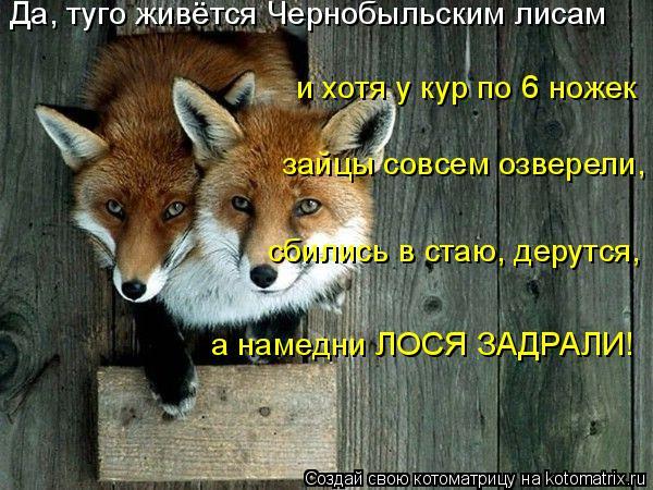 Котоматрица: Да, туго живётся Чернобыльским лисам и хотя у кур по 6 ножек зайцы совсем озверели, сбились в стаю, дерутся, а намедни ЛОСЯ ЗАДРАЛИ!