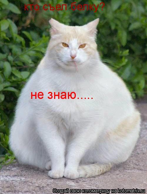 Котоматрица: кто съел белку? не знаю.....