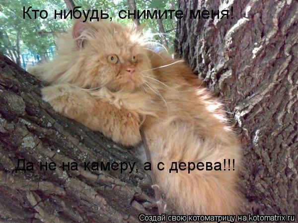 Котоматрица: Кто нибудь, снимите меня! Да не на камеру, а с дерева!!!