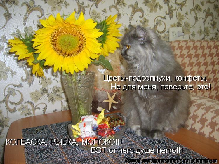 Котоматрица: Цветы-подсолнухи, конфеты... Не для меня, поверьте, это! ВОТ от чего душе легко!!! КОЛБАСКА, РЫБКА, МОЛОКО!!!