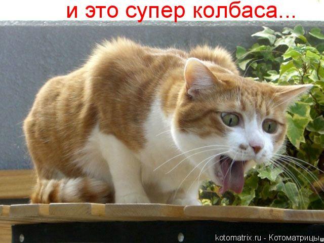 Котоматрица: и это супер колбаса...