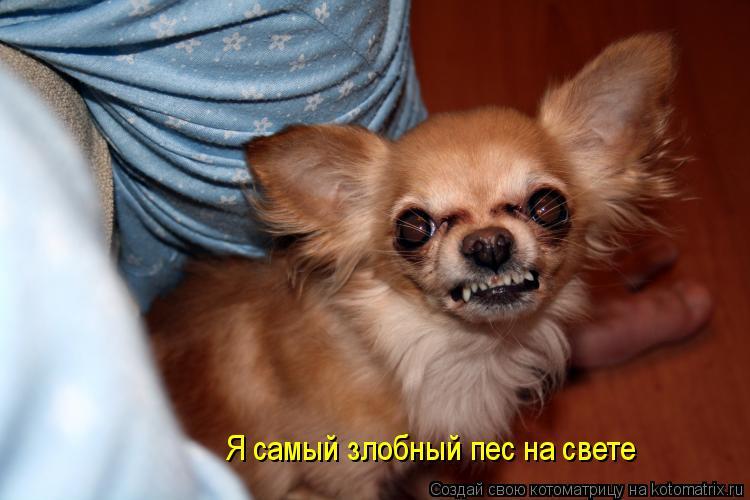 Котоматрица: Я самый злобный пес на свете