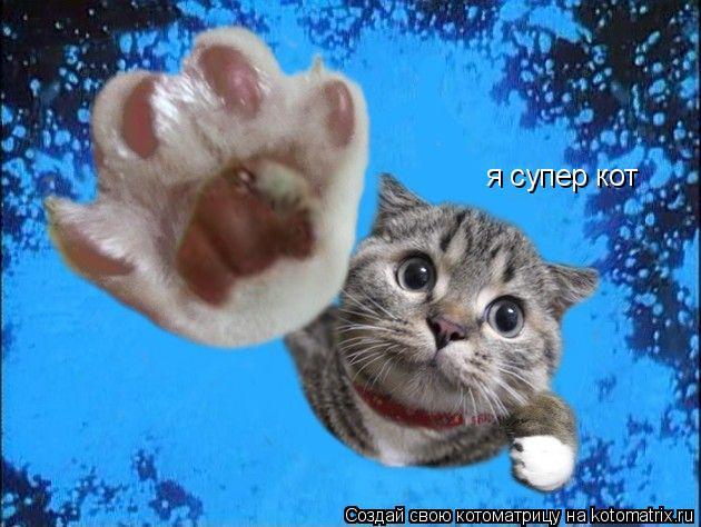 Котоматрица: я супер кот