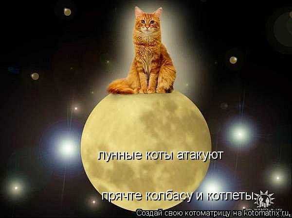 Котоматрица: лунные коты атакуют прячте колбасу и котлеты...