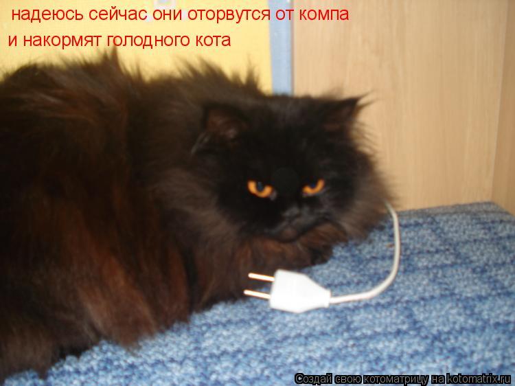 Котоматрица: надеюсь сейчас они оторвутся от компа  и накормят голодного кота
