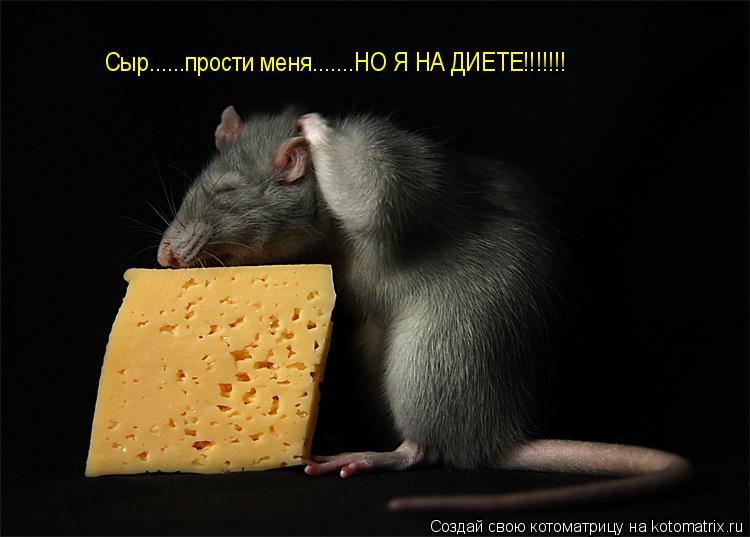 Котоматрица: Сыр......прости меня.......НО Я НА ДИЕТЕ!!!!!!!