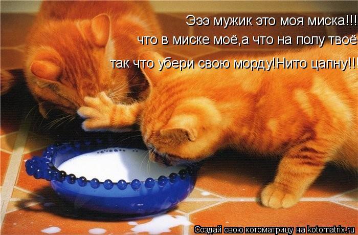 Котоматрица: Эээ мужик это моя миска!!! что в миске моё,а что на полу твоё. так что убери свою морду!Нито цапну!!!