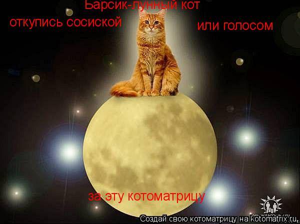 Котоматрица: Барсик-лунный кот откупись сосиской или голосом за эту котоматрицу