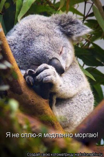 Котоматрица: Я не сплю-я медленно моргаю!