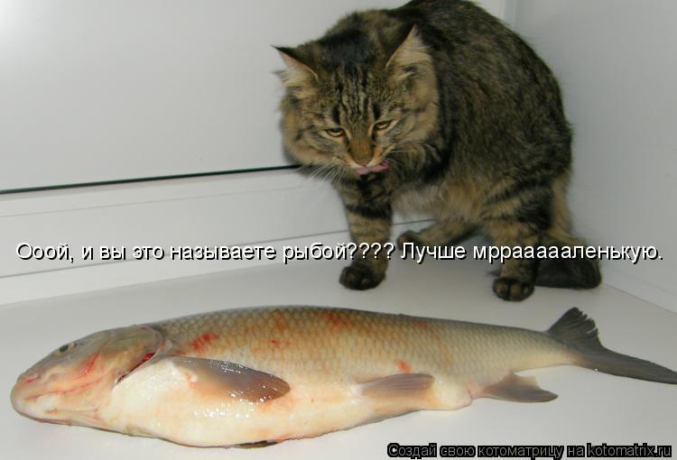Котоматрица: Ооой, и вы это называете рыбой???? Лучше мрраааааленькую.