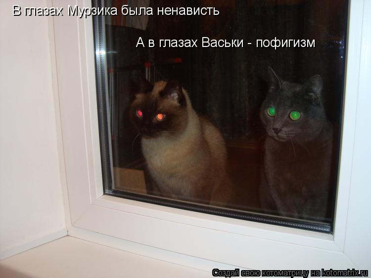 Котоматрица: В глазах Мурзика была ненависть А в глазах Васьки - пофигизм