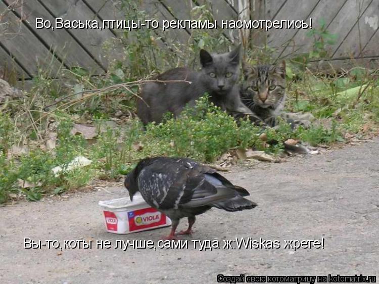 Котоматрица: Во,Васька,птицы-то рекламы насмотрелись! Вы-то,коты не лучше,сами туда ж:Wiskas жрете!
