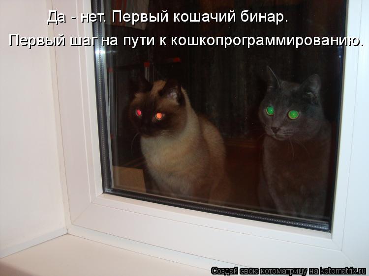 Котоматрица: Да - нет. Первый кошачий бинар.  Первый шаг на пути к кошкопрограммированию.