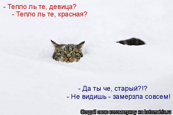 Котоматрица: - Тепло ль те, девица? - Тепло ль те, красная? - Да ты че, старый?!? - Не видишь - замерзла совсем!