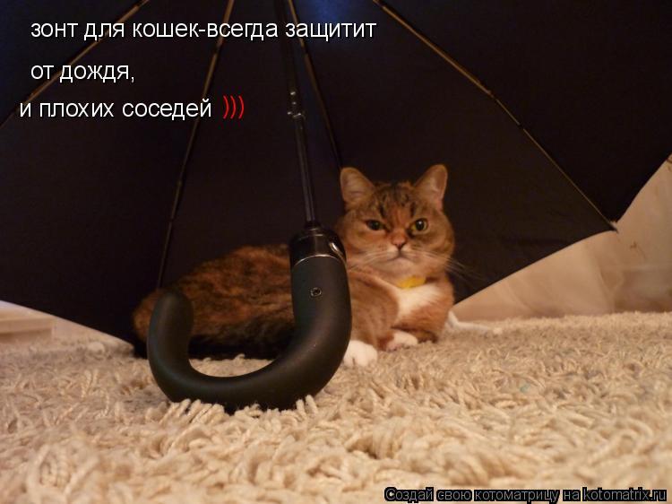 Котоматрица: зонт для кошек-всегда защитит от дождя, и плохих соседей )))