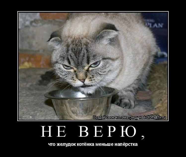 Котоматрица: Не верю, что желудок котёнка меньше напёрстка
